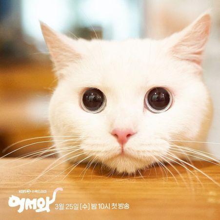 Meow-the-secret-boy-cat-kbs-3