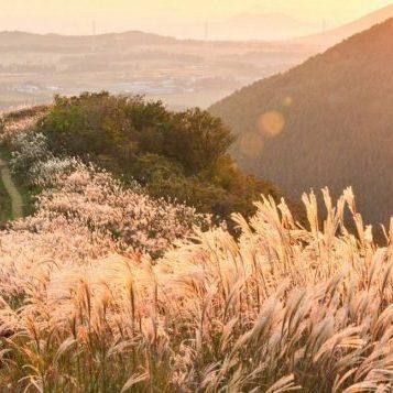 korea-jeju-autumn-foliagejeju-autumn-itineraryjeju-autumn-monthjeju-fall-foliagejeju-autumn-foliage-696x357